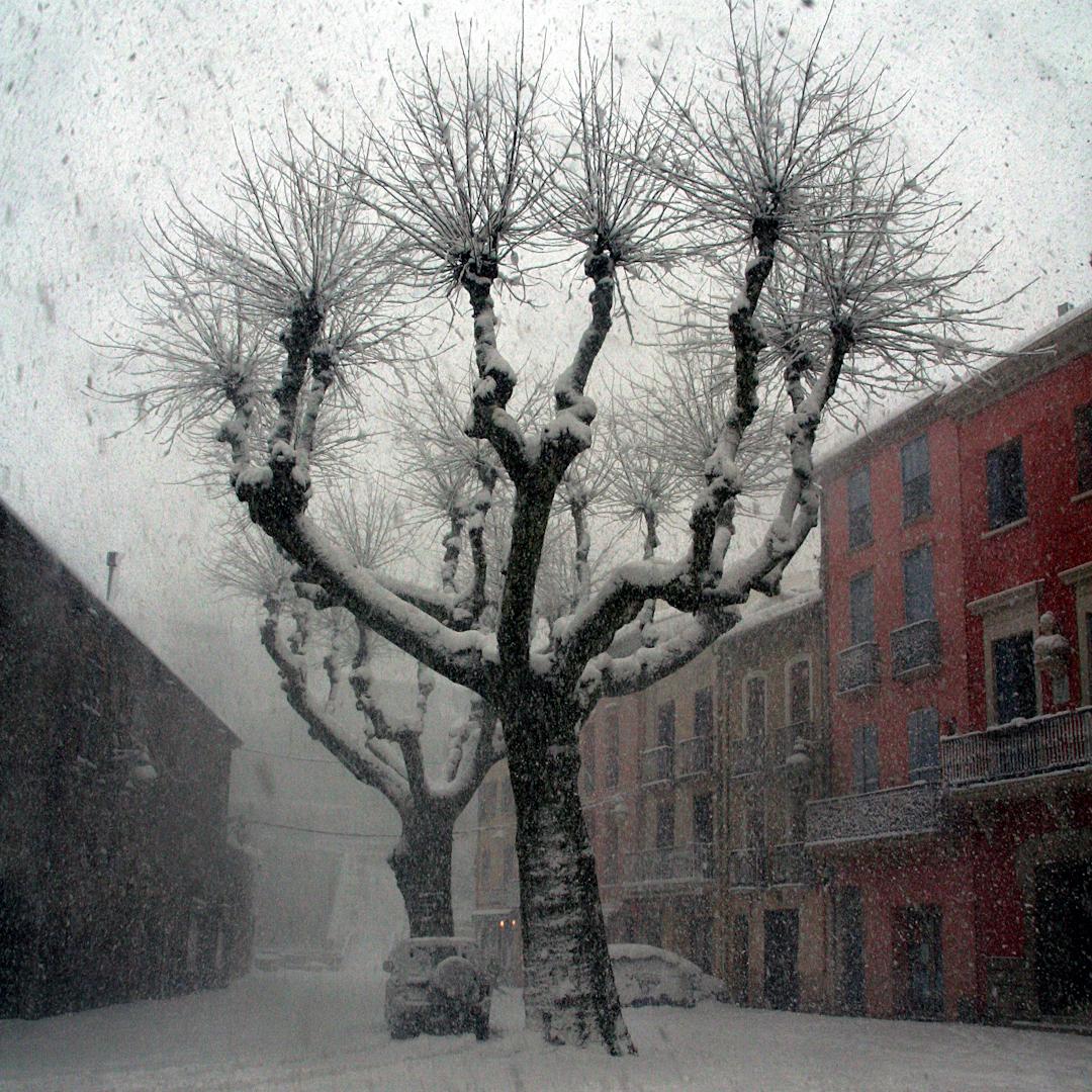 vintertre i Collioure (1 of 1)